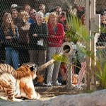 Are You A Caged Animal? The Man and The Tiger