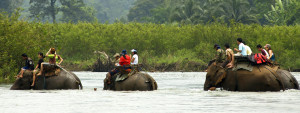 zz-thailandelephant